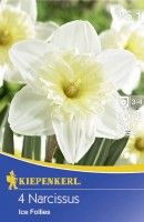 Kiepenkerl Blumenzwiebel Narzisse Ice Follies