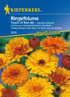 Kiepenkerl Ringelblume Touch Of Red