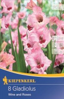 Kiepenkerl Blumenzwiebel Gladiole Wine and Roses